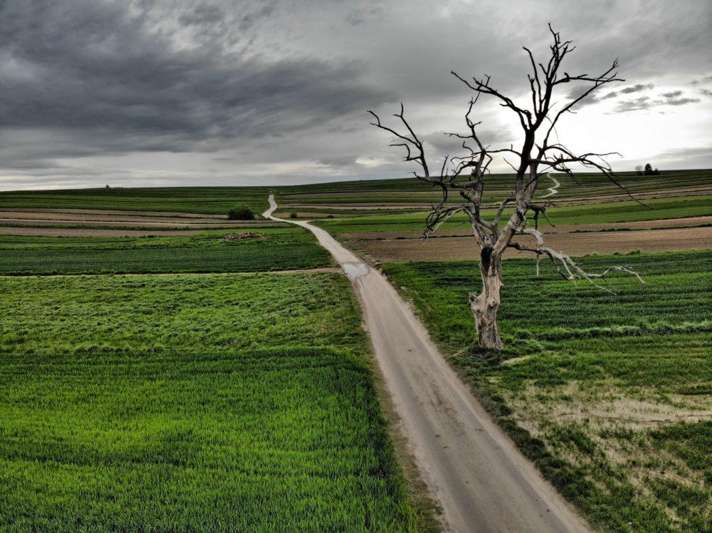 Suche drzewo w Sułoszowej
